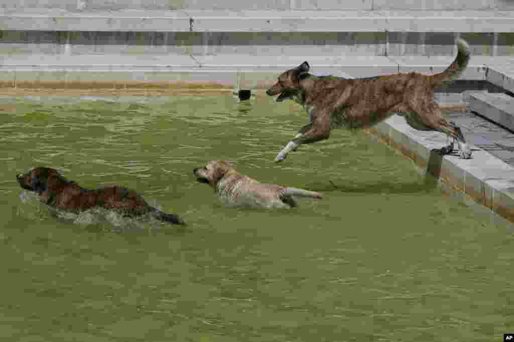 گرمای شدید در اسپانیا موجب شده این سگها به حوض آب بپرند.
