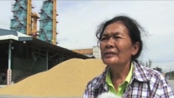 Chính sách thu mua lúa gạo ở Thái Lan
