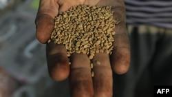 Prodavac semena peskavice u radnji u Kairu, Egipat