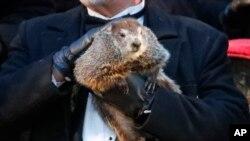 ທ່ານ ຈອນ ກຣິຟຟິສ ຜູ້ເບິ່ງແຍງໜູໃຫຍ່ ຊື່ວ່າ Punxsutawney Phil, ຂອງສະໂມສອນໜູໃຫຍ່ ຫຼື Groundhog ທີ່ເປັນນັກພະຍາກອນອາກາດ, ໃນລະຫວ່າງ ການສະເຫຼີມສະຫຼອງ Groundhog Day ຄັ້ງທີ 132 ຢູ່ທີ່ Gobbler's Knob ໃນເມືອງ Punxsutawney, ລັດເພັນຊີລເວເນຍ, ວັນທີ 2 ກຸມພາ 2018.