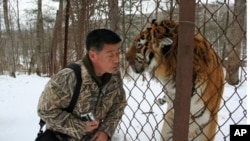 """Tiger Spirit"" opens with Lim Sun Nam's quest to find tigers in the Korean mountains. Here, he nuzzles a tiger at a Siberian sanctuary. Photo credit: Joo Hyun Kwon (Storyline Entertainment)."
