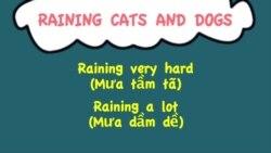 Thành ngữ tiếng Anh thông dụng: Raining Cats and Dogs (VOA)