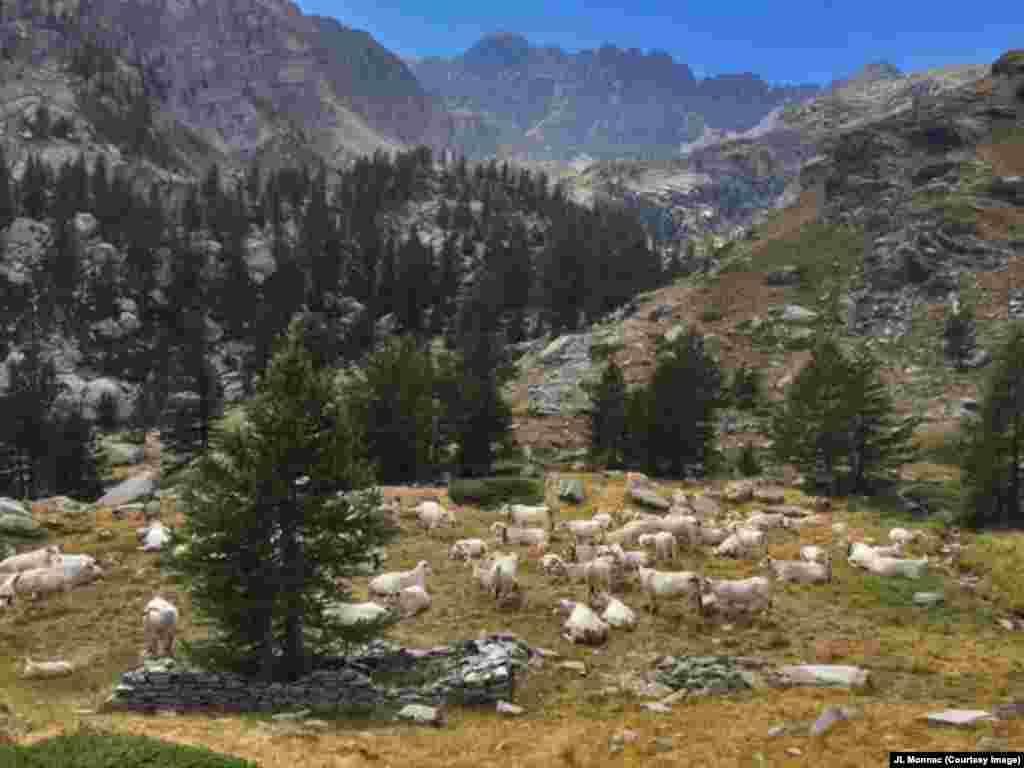 프랑스 메르캉투르 국립공원의 계곡에서 소 떼가 쉬고 있다.