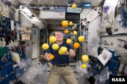 Scott Kelly with lemons in space. Researchers studied how diet affected his microbiome as part of NASA's Twins Study.