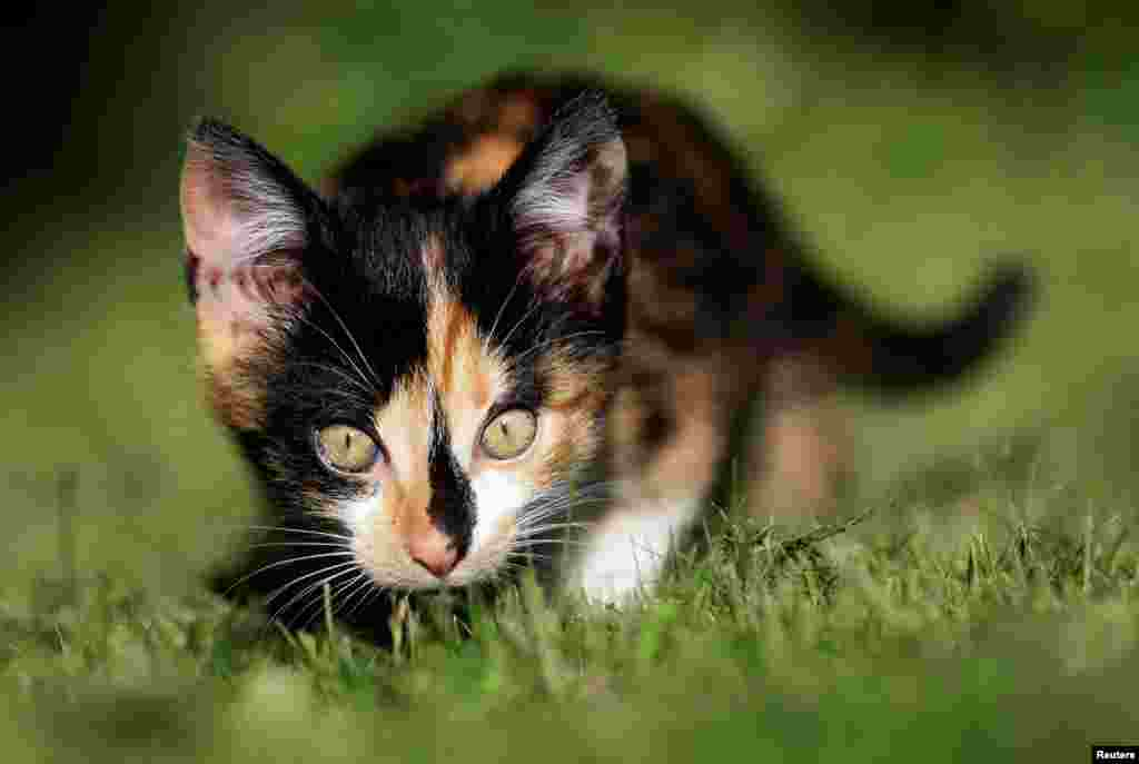 A kitten is seen in the village of Krompach near the town of Cvikov, Czech Republic, July 11, 2020.