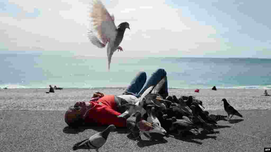 دوستی انسان و کبوتر