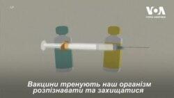 Коронавірус: типи вакцин у розробці. Відео