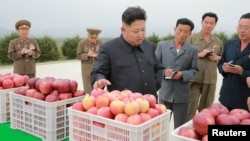 김정은 북한 국위원장이 지난 9월 강원도 고산군 소재 고산과수종합농장을 현지지도했다고 조선중앙통신이 보도했다.