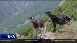 Bukuritë rustike të Nivicës dhe turizmi