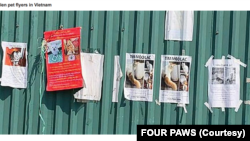 Những tấm thông báo tìm mèo bị mất của các chủ nhân ở Việt Nam. (Photo by FOUR PAWS)