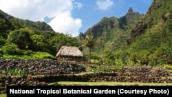 Limahuli Garden and Preserve is set in a verdant tropical valley on the north shore of the Hawaiian Island of Kaua`i. Against a backdrop of majestic Makana Mountain, the garden overlooks the Pacific Ocean.