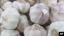 Scientists say they have discovered another health benefit of garlic.