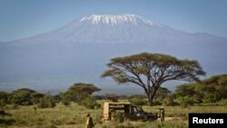 In this Tuesday, Feb. 19, 2013 photo, the highest mountain in Africa, Mount Kilimanjaro in Tanzania, looms in the background as a team from the Kenya Wildlife Service (KWS) and the International Fund for Animal Welfare (IFAW) prepares to fit elephants wit