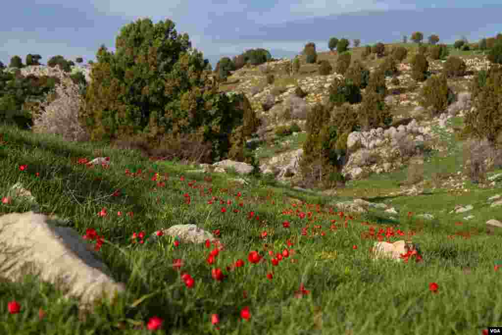 A field in Lebanon's mountainous, and beautiful, Akkar region. Many governments advise against travel to the region due to its proximity to Syria. (John Owens for VOA News)