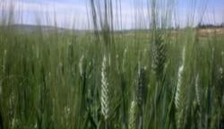 África prepara-se para minimizar o impacto das mudanças climáticas na agricultura - 13:00