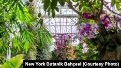 Fotoğraflar: New York Botanik Bahçesi (Fotogaleriyi izlemek için tıklayın)