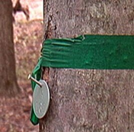 Memorial trees in EcoEternity Forests are numbered with small tags. A green band means a tree is still available.