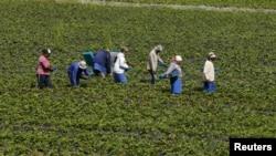 El gobierno considera a la agricultura como una de las industrias más peligrosas.