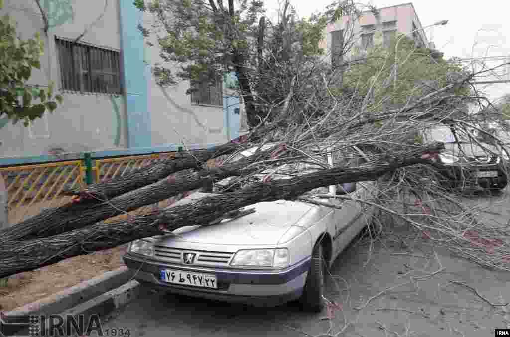 وزش باد شدید در اراک و شکسته شدن درختان عکس: علی کریمی