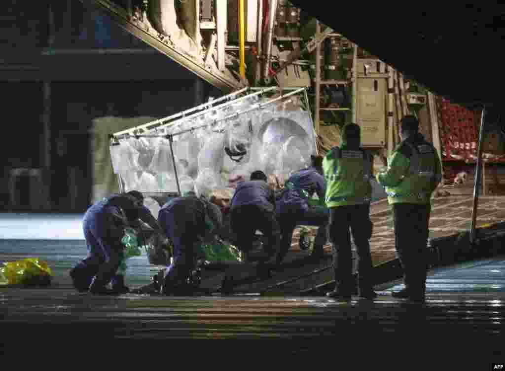 Một nhân viên y tế được chẩn đoán nhiễm Ebola sau khi trở về từ Sierra Leone được đưa lên máy bay vận tải Hercules tại sân bay quốc tế Glasgow, bay tới Bệnh viện Royal Free ở London.