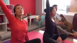 Дога - вежбање јога со кучиња
