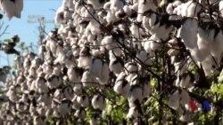 纪录片《棉花之路》:廉价时尚的高昂代价