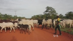 Armed Herders' Raids Spur Crackdown Pledge in Nigeria