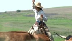 สัมผัสชีวิตคาวบอยสไตล์อเมริกันในไร่ปศุสัตว์รัฐแคนซัส