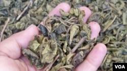 Teh hijau asal perkebunan teh di Jawa Barat. (VOA/R. Teja Wulan)