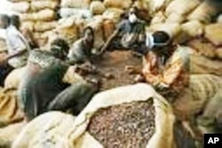 Bags of cocoa for export