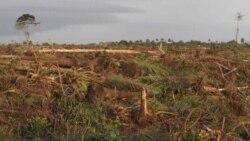 Déforestation: Samuel Nguiffo, directeur du CED au Cameroun, joint par Nathalie Barge