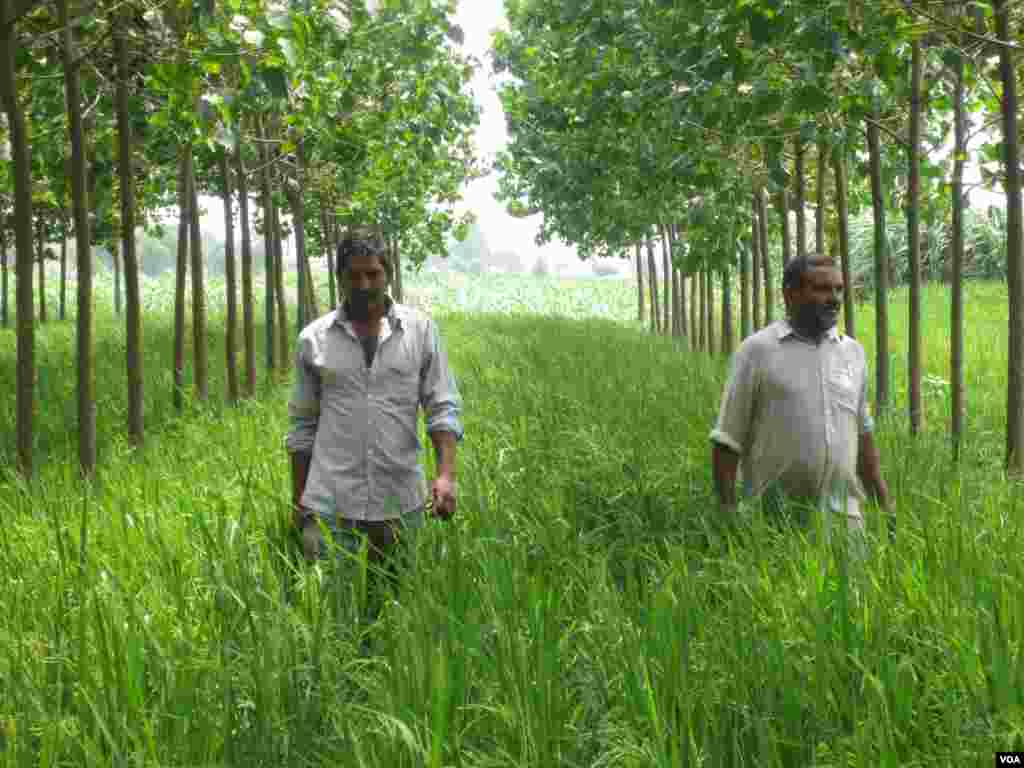 Farmers Chaudhry Sukhvir Singh and Chaudhry Singh at a farm near the town of Indri in India's Haryana state. (Aru Pande/VOA)