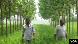 Indian Farmers Fighting Pollution One Tree at a Time