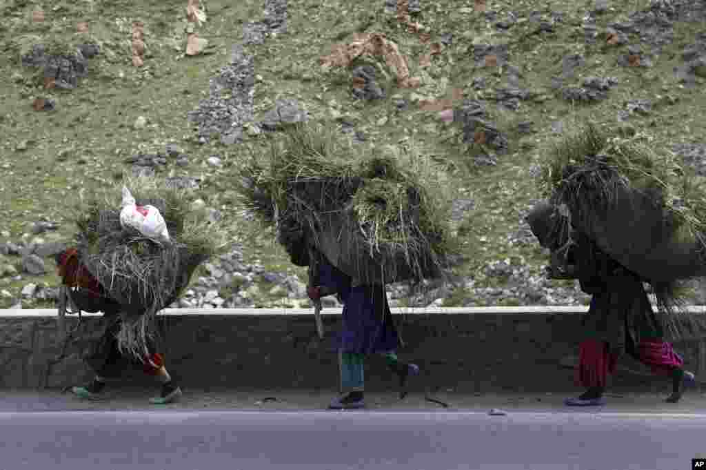 Women carry grass for cattle on their backs, in the Srobi district of Kabul, Afghanistan.