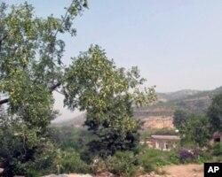 高杰村以种植和加工大枣为主业