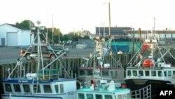 Nhiều ngư dân đánh tôm cũng ngại ngùng đưa tàu đánh bắt của họ ra khơi