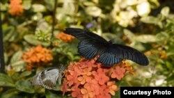 Butterflies at Smithsonian.