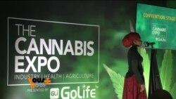 L'industrie du cannabis en plein essor