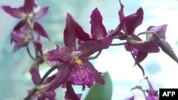 Izložba orhideja u Vašingtonu