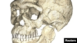 A composite reconstruction of the earliest known Homo sapiens fossils from Jebel Irhoud in Morocco, based on micro computed tomographic scans of multiple original fossils, is shown in this undated handout photo obtained by Reuters, June 7, 2017.