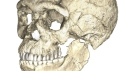 Quiz - Old Fossils Give Humans New History