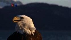Birdwatching untuk Monitor Lingkungan