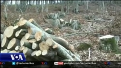 Moratoriumi i pyjeve