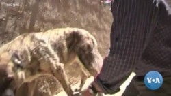 Afghanistan Animal Rescue Triggers Dispute Between Charity and British Government