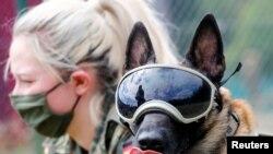 軍犬通過訓練 可否幫助識別新冠病毒感染者?