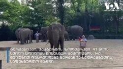 სპილოები ევრო 2020-ის შედეგების გამოცნობას ცდილობენ