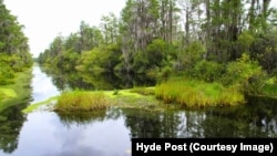 Wilderness Awaits in the Okefenokee Swamp