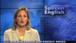 Anh ngữ đặc biệt: Kenya Deadly Maize Disease (VOA)