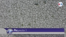 """Proyecto """"Techo verde"""" ¿Utopía ambientalista?"""