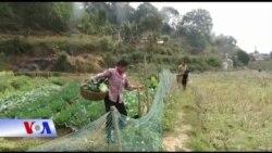Nông dân Việt mong APEC làm thay đổi đời sống
